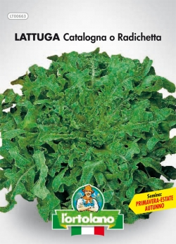 LATTUGA Catalogna o Radichetta