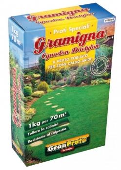 GRAMIGNA O BERMUDA GRASS