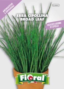 ERBA CIPOLLINA - BROAD LEAF