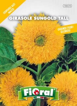 GIRASOLE SUNGOLD TALL