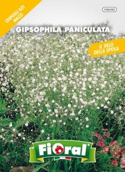 GIPSOPHILA PANICULATA