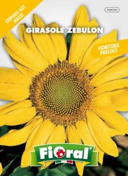 GIRASOLE ZEBULON