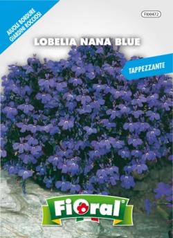 LOBELIA NANA BLUE