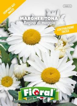 MARGHERITONA Regina di maggio