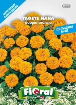 TAGETE NANA Doppia arancio