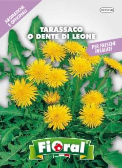 TARASSACO O DENTE DI LEONE