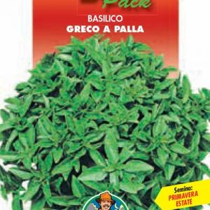 Produzione e vendita basilico greco a palla vasta scelta for Semina basilico in vaso