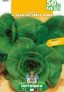 CICORIA a grumolo verde scuro
