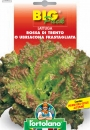 LATTUGA Rossa di Trento o Ubriacona frastagliata