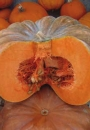 ZUCCA Moscata Di Provenza (Cucurbita moschata)
