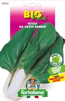 BIETOLA DA COSTE Barese